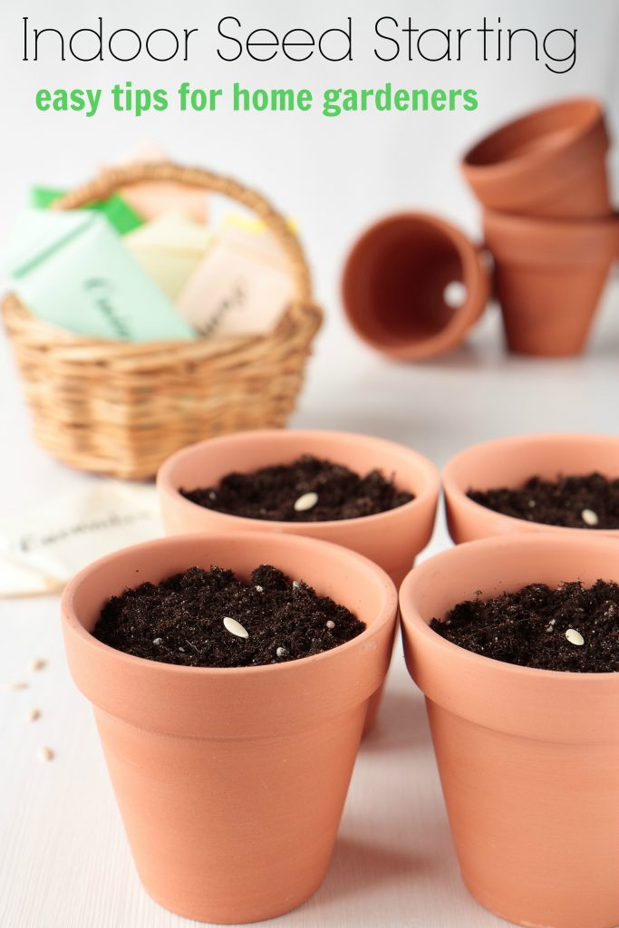Easy Indoor Seed Starting Tips for Home Gardeners