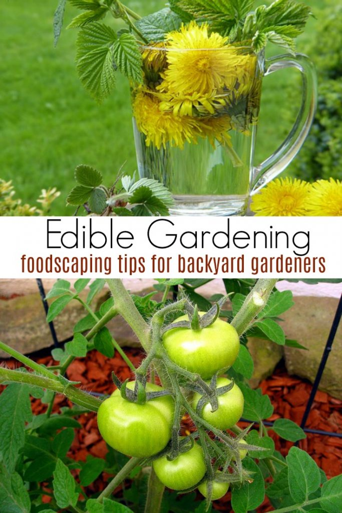 Edible Gardening and Foodscaping Tips for Backyard Gardeners