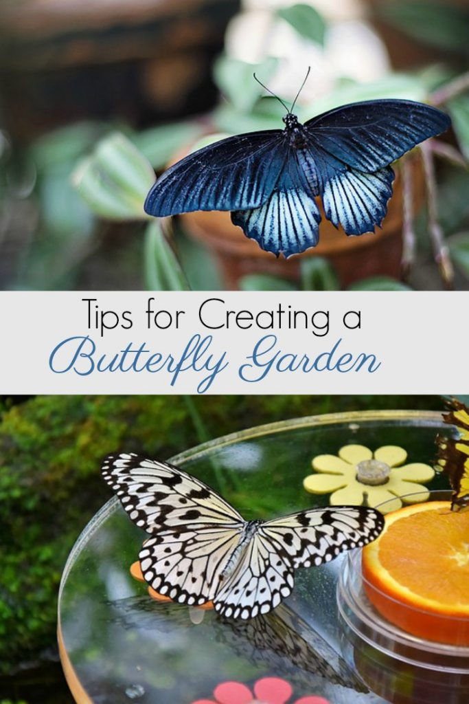 Tips for Planting a Butterfly Garden to Save the Pollinators