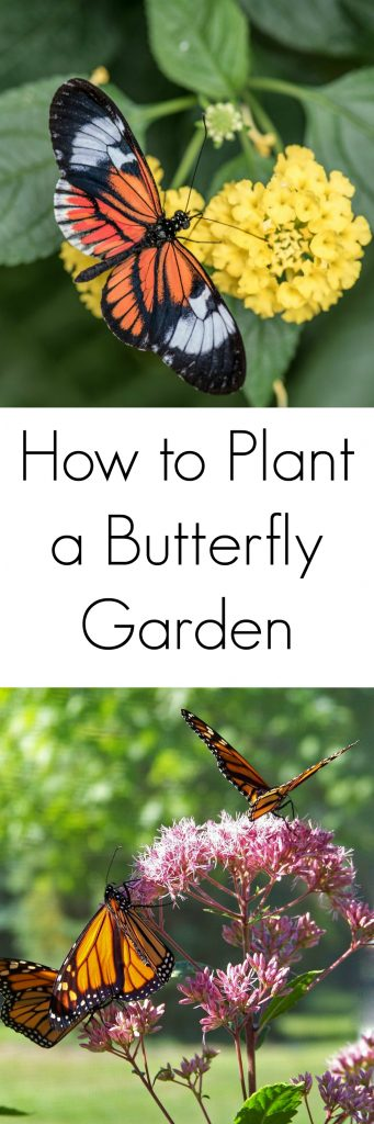 Tips for Planting a Butterfly Garden to Support the ...