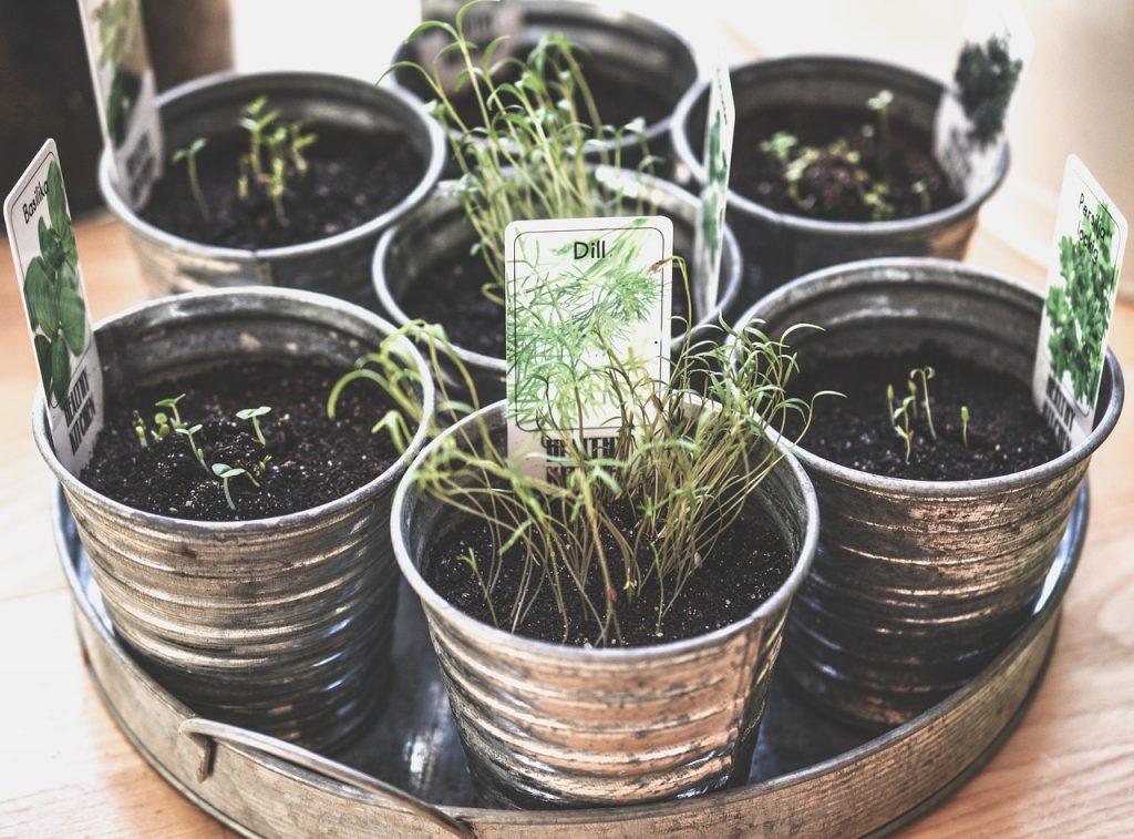 Edible Gardening Tips for Beginning Gardeners
