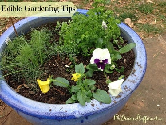 Edible Gardening Tips for Beginning Gardeners
