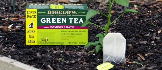 Love Tea? Plant a Teabag Garden!   #AmericasTea