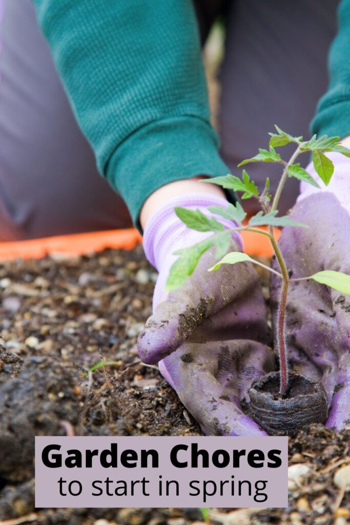 person planting small plant in spring garden soil