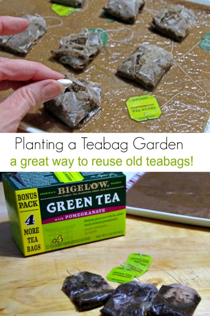 How to Plant a Teabag Garden