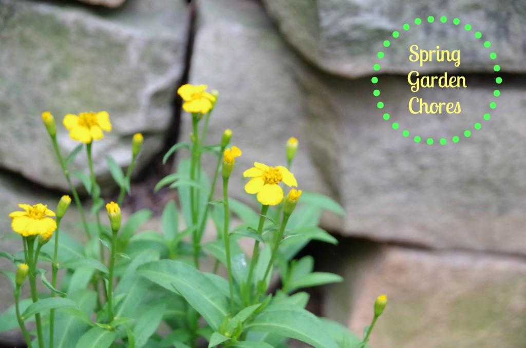 Spring Garden Chores, a Quick Update and a Garden Linky