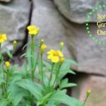Spring Garden Chores, a Quick Update and a Garden Linky!