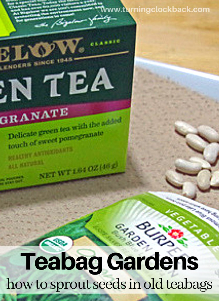Teabag Gardens and how to sprout seeds in old teabags