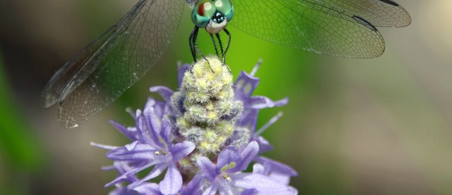 How to Attract Beneficial Insects to Your Garden and a Garden Linky!