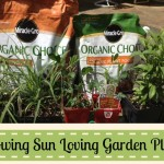 Sun Loving Garden Plants and Organic Choice