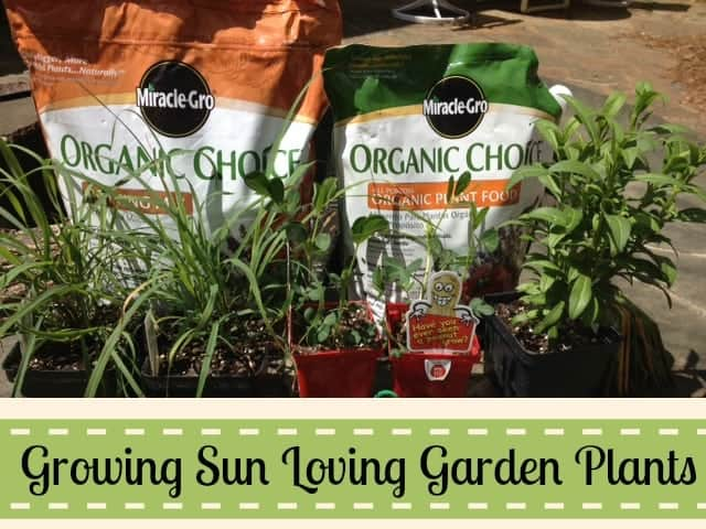 Sun Loving Garden Plants