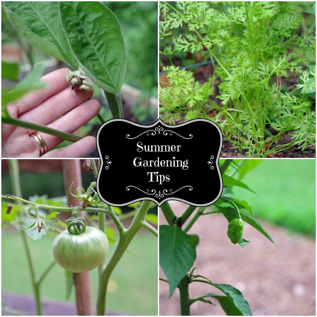 Summer Gardening Tips Collage 2