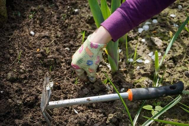 person weeding the garden