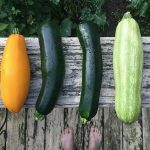Summer Gardening Tips for a Bountiful Harvest