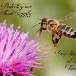 Protecting our Food Supply One Honeybee at a Time!