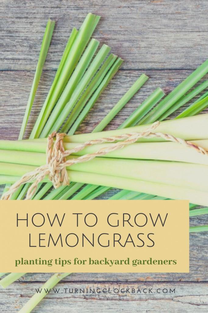 lemongrass on cutting board with text 'How to Grow Lemongrass'