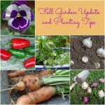 Fall Garden Tips and Update