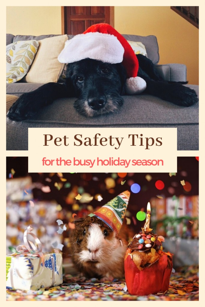 Pet Safety TIps for the Busy Holiday Season