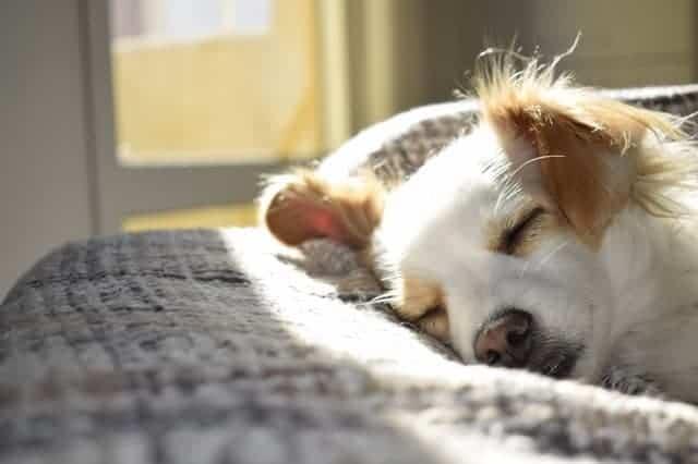 small dog sleeping on bed