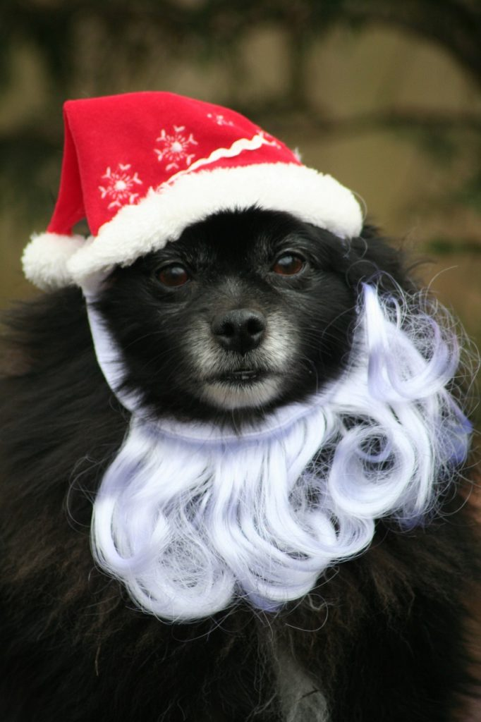 dog with santa hat and beard on
