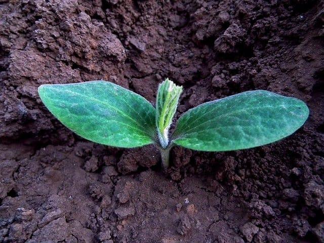 small seedling in garden