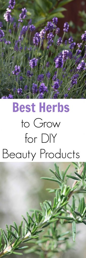 Best Herbs to Grow for DIY Beauty Products