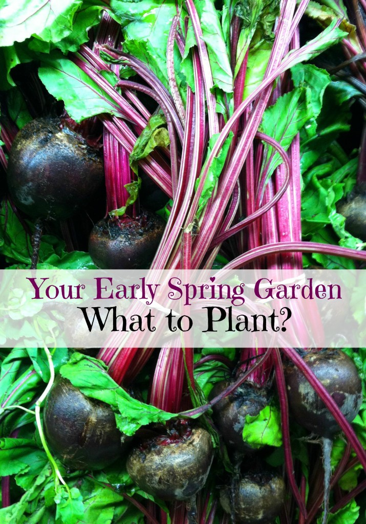 What to plant in an early spring garden