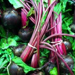 beets for an early spring garden