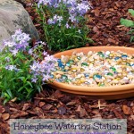 How to Save the Pollinators with a Honeybee Watering Station 2