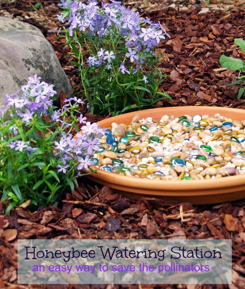 save the pollinators with a honeybee watering station
