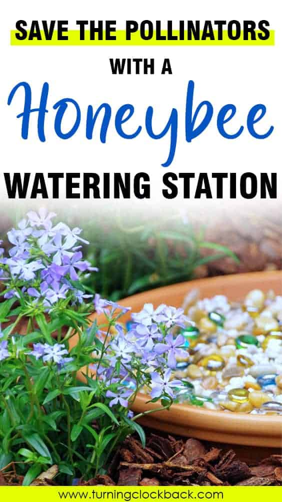 This pollinator watering station is an easy DIY garden project to help save pollinators.