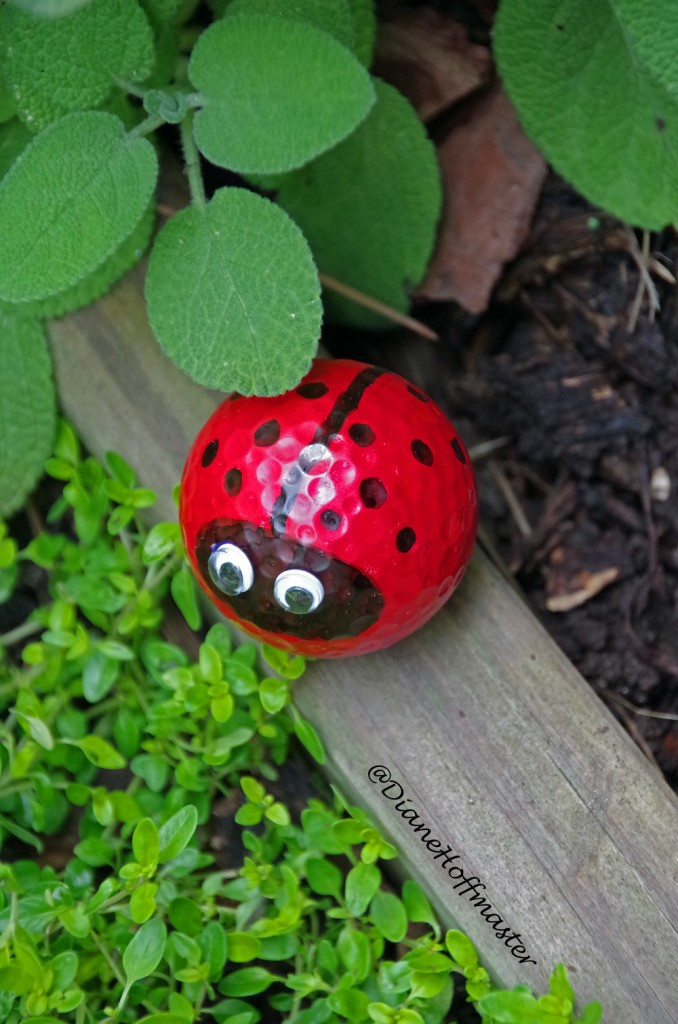 Golf Ball Lady Bug   Turning The Clock Back