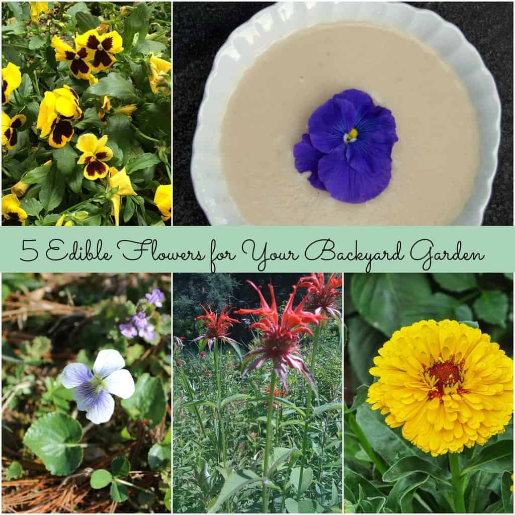 5 Edible Flowers For Your Backyard Garden Turning The Clock Back