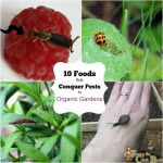 Use These 10 Foods in Your Organic Garden!