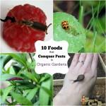 Garden Pests in the Organic Garden 2