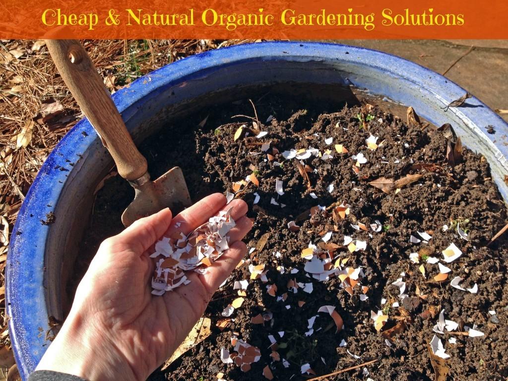 Foods for organic garden success
