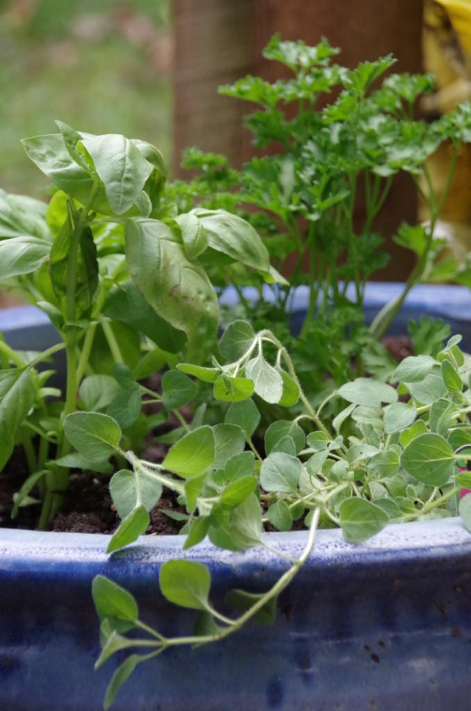 Diane-Hoffmaster_Best-Herbs-for-a-Backyard-Herb-Garden_April2015