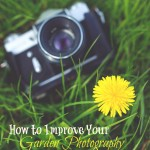 How to Improve Your Garden Photography