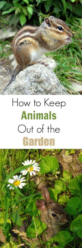 How to Keep Animals Out of the Garden Turning the Clock Back