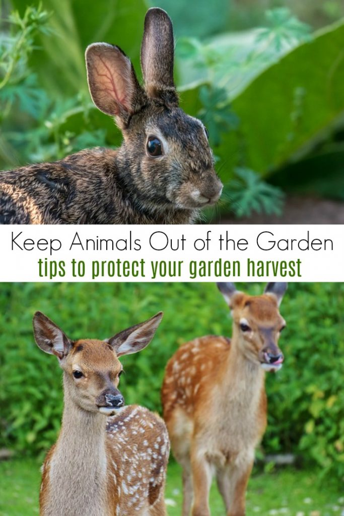 How to protect your garden from animals