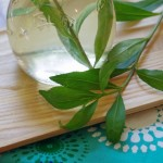 Tarragon Vinegar Recipe and Other Uses for Tarragon