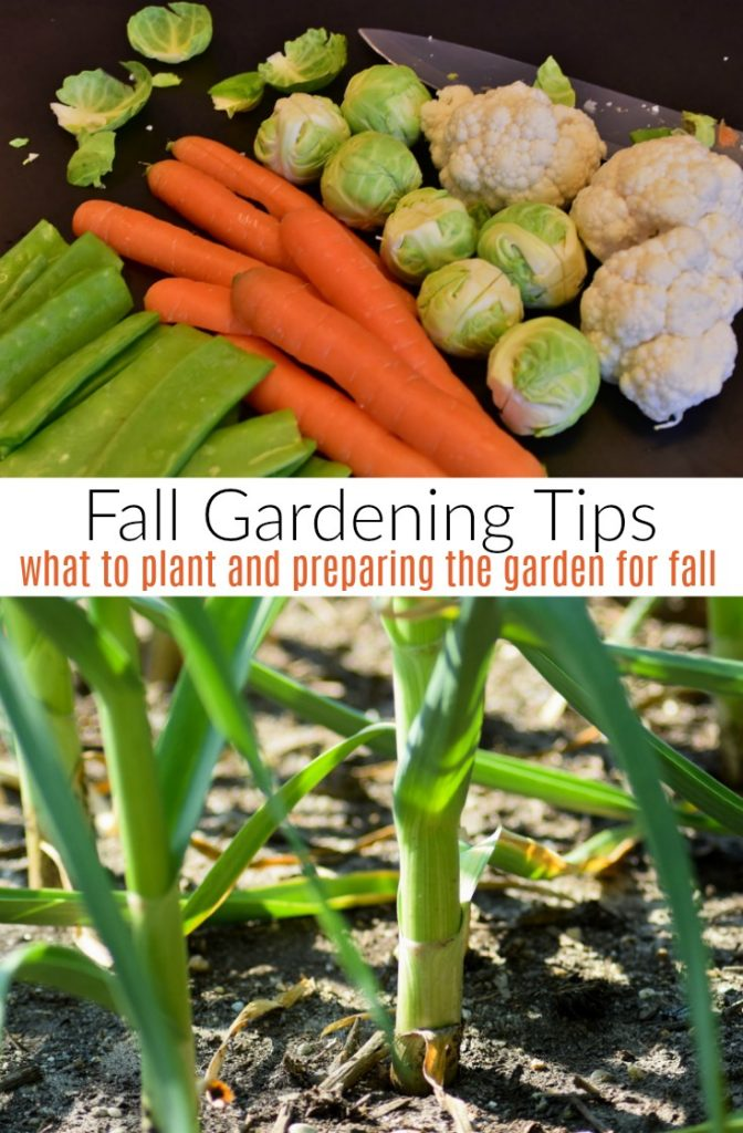 Fall Gardening Tips. What To Plant And Preparing The Garden For Fall