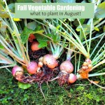 Fall Vegetable Gardening:  5 Things To Plant Now