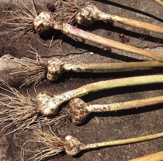 Fall Vegetable Gardening 5 Things To Plant Now