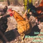 Free Range Chicken and the #ChangeYourChicken Challenge