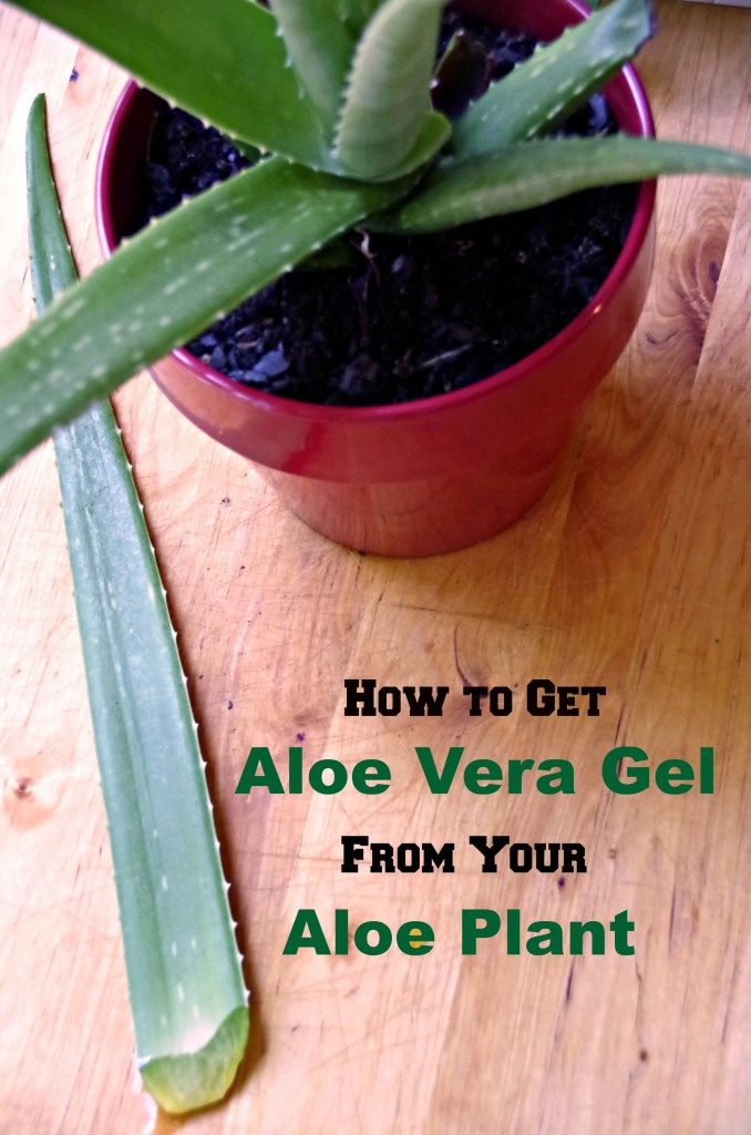 How to get aloe vera gel from your aloe plant for external use only