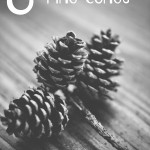 8 Things to do with Pine Cones