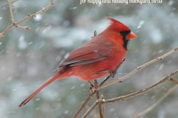 Winter Bird Feeding Tips for Happy and Healthy Backyard Birds