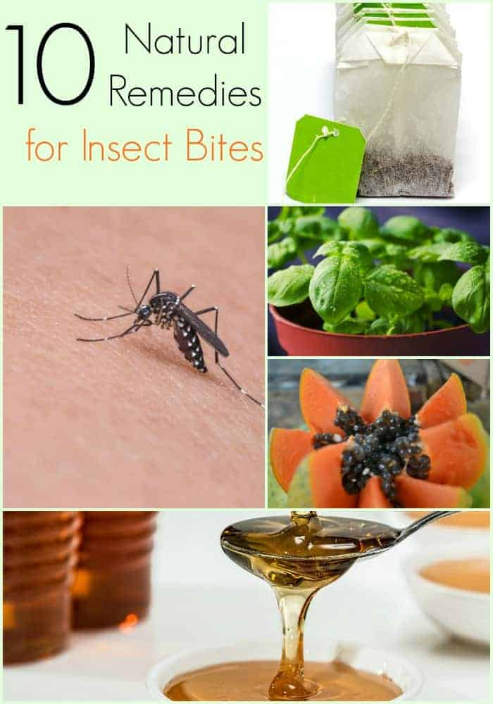 10 Natural Remedies for Insect Bites