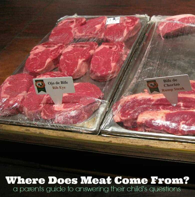 Where does meat come from A parent's guide to answering their child's questions